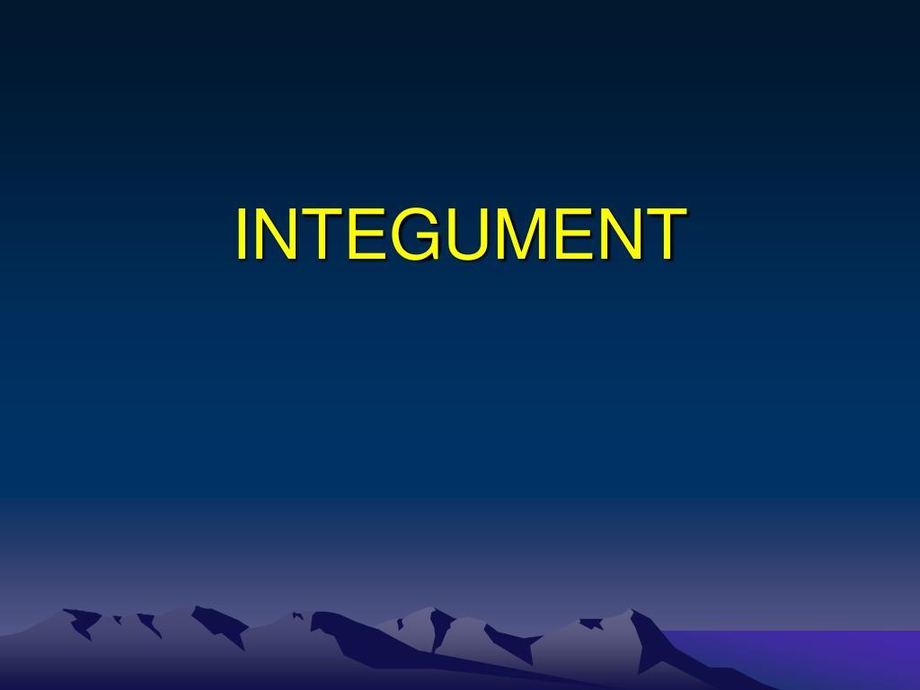 integument l.