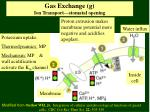 gas exchange g ion transport stomatal opening