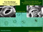 gas exchange open closed stomata