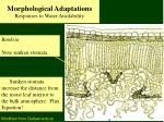 morphological adaptations responses to water availability20