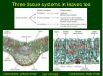 three tissue systems in leaves too