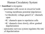 human circulatory system29