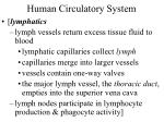 human circulatory system39