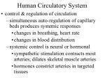human circulatory system48