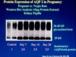 protein expression of aqp 2 in pregnancy