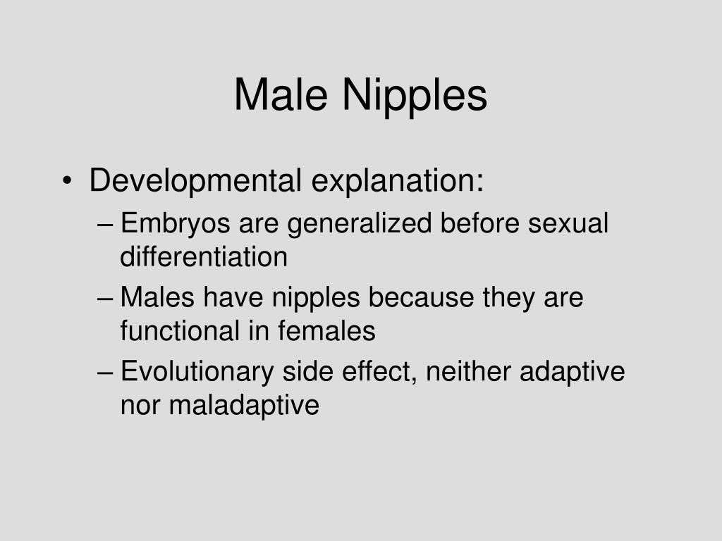 Male Nipples
