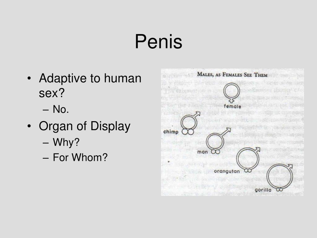 Adaptive to human sex?