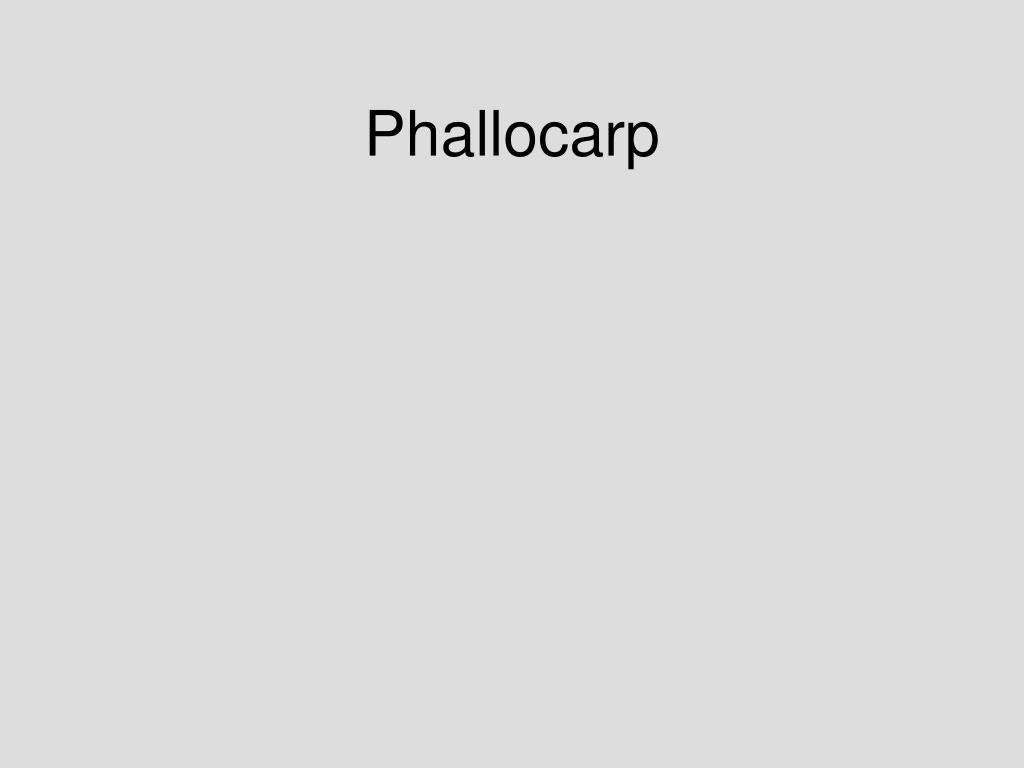 Phallocarp
