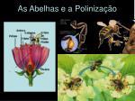 as abelhas e a poliniza o