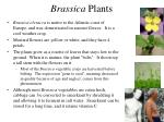 brassica plants