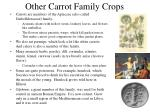 other carrot family crops