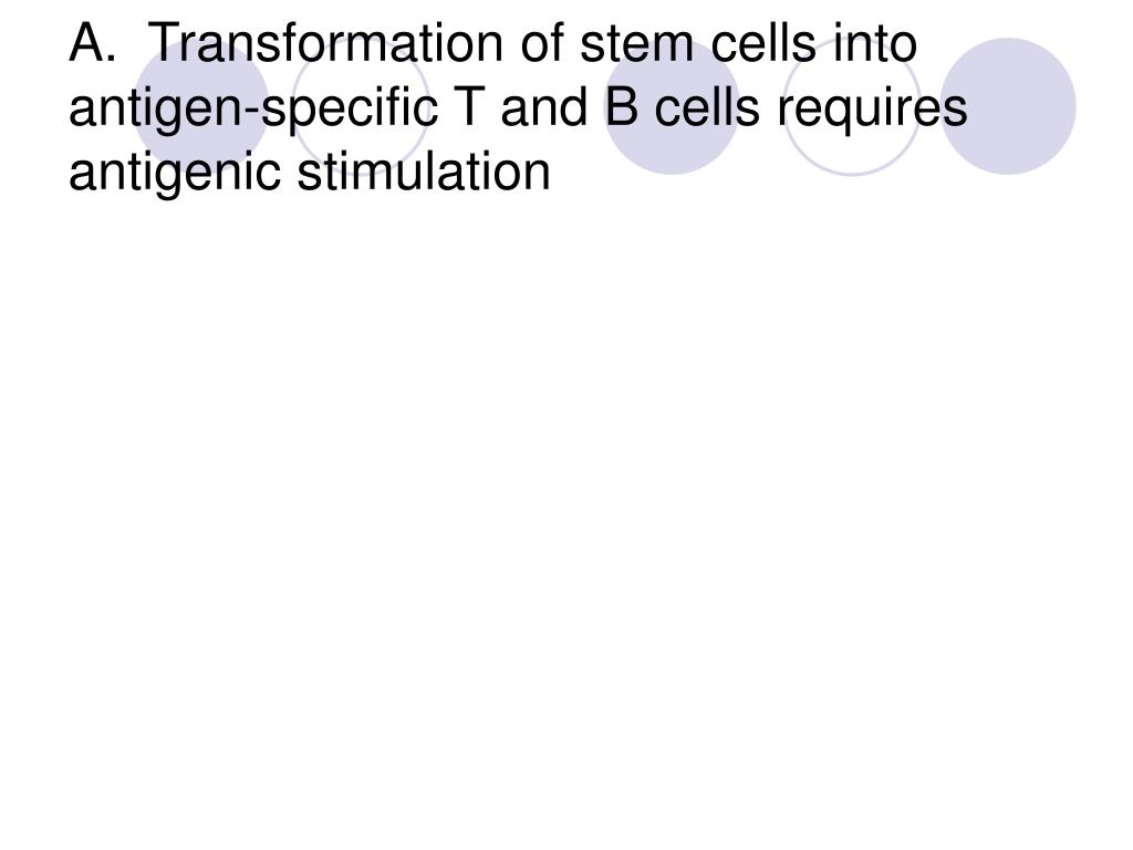 A.  Transformation of stem cells into antigen-specific T and B cells requires antigenic stimulation