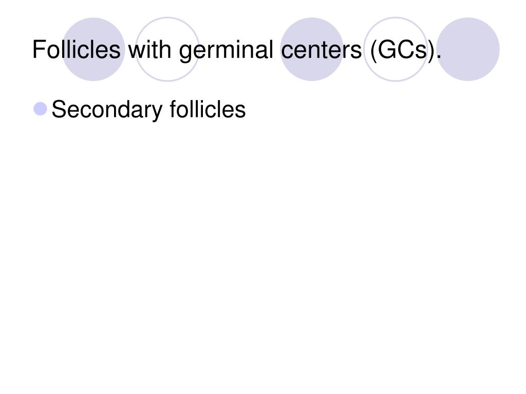 Follicles with germinal centers (GCs).