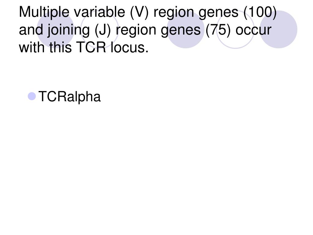 Multiple variable (V) region genes (100) and joining (J) region genes (75) occur with this TCR locus.