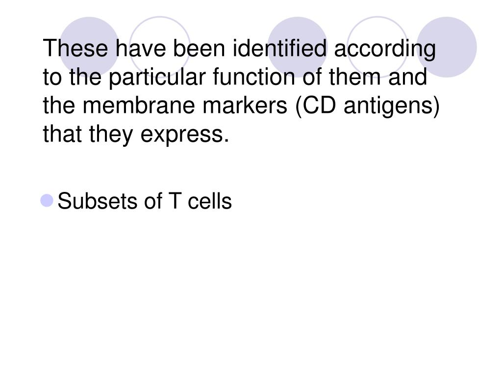 These have been identified according to the particular function of them and the membrane markers (CD antigens) that they express.