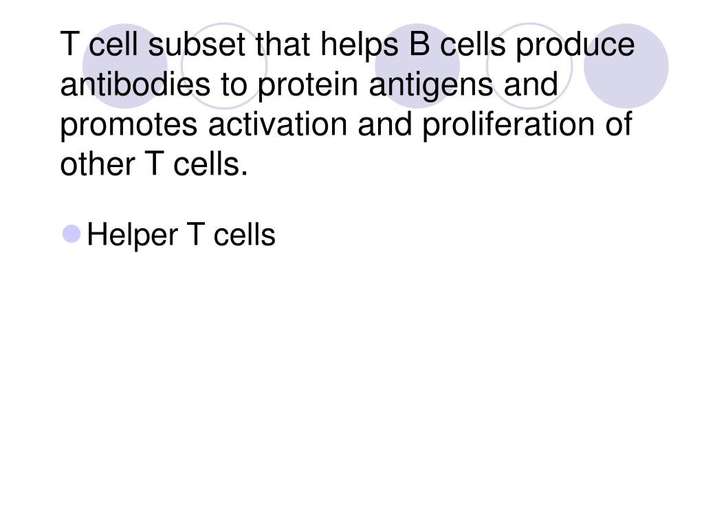 T cell subset that helps B cells produce antibodies to protein antigens and promotes activation and proliferation of other T cells.