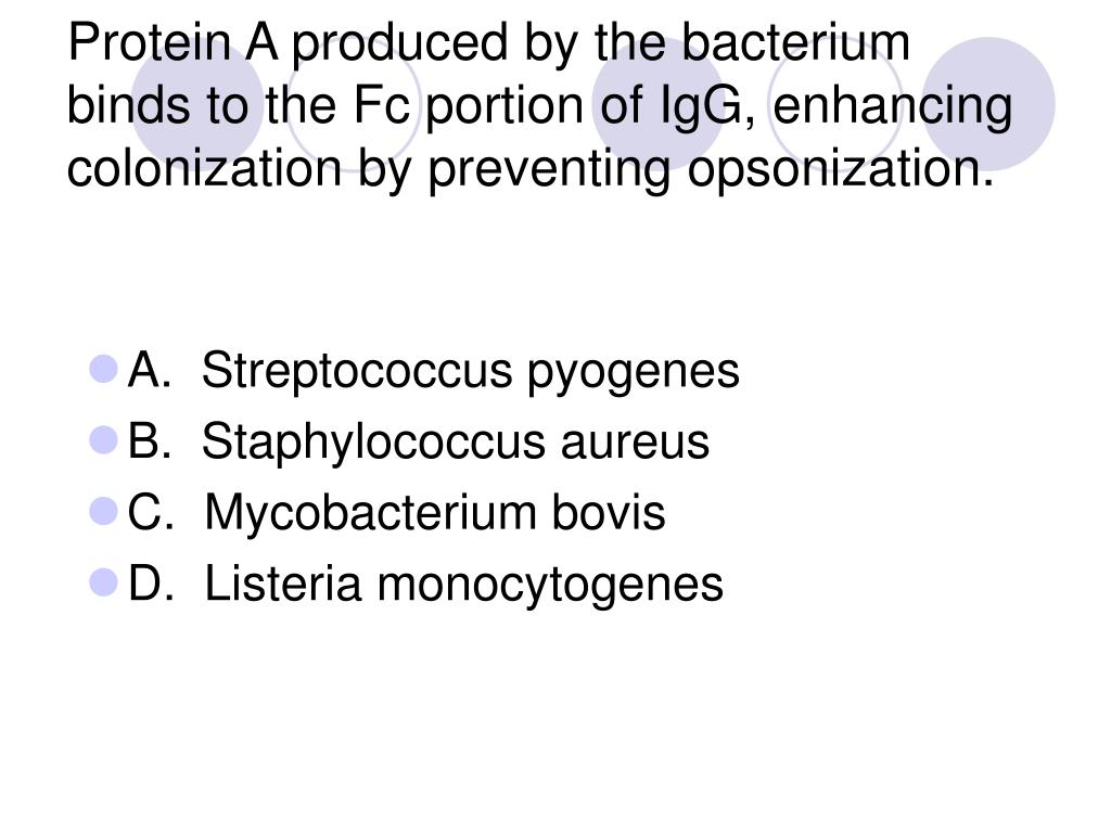 Protein A produced by the bacterium binds to the Fc portion of IgG, enhancing colonization by preventing opsonization.