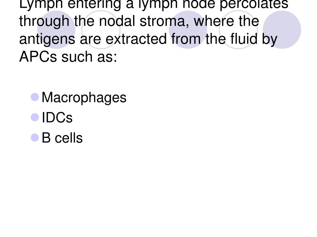 Lymph entering a lymph node percolates through the nodal stroma, where the antigens are extracted from the fluid by APCs such as: