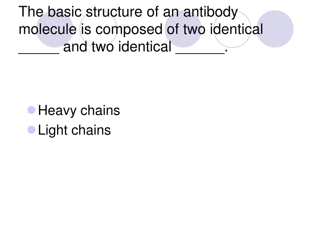 The basic structure of an antibody molecule is composed of two identical _____ and two identical ______.