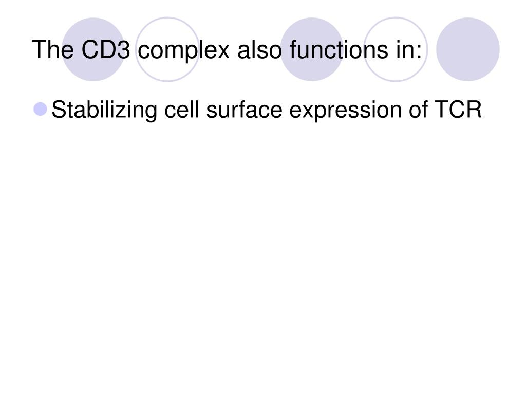 The CD3 complex also functions in:
