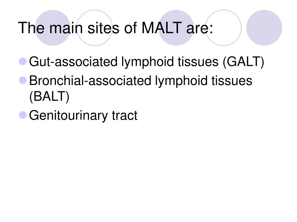 The main sites of MALT are: