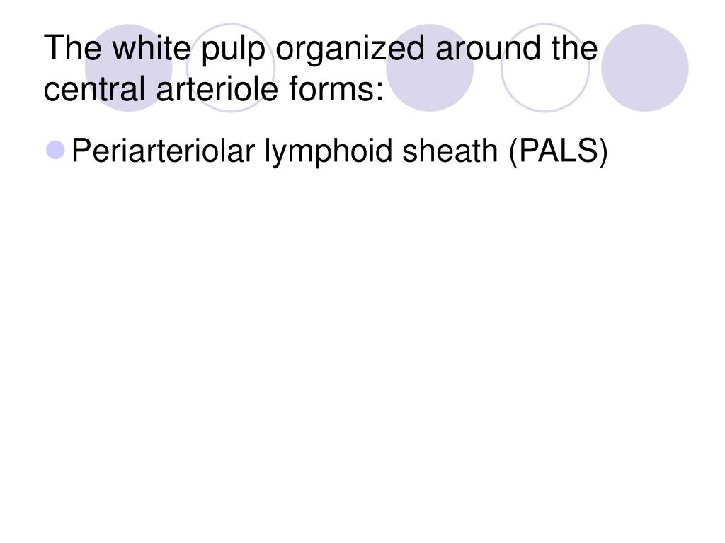 The white pulp organized around the central arteriole forms: