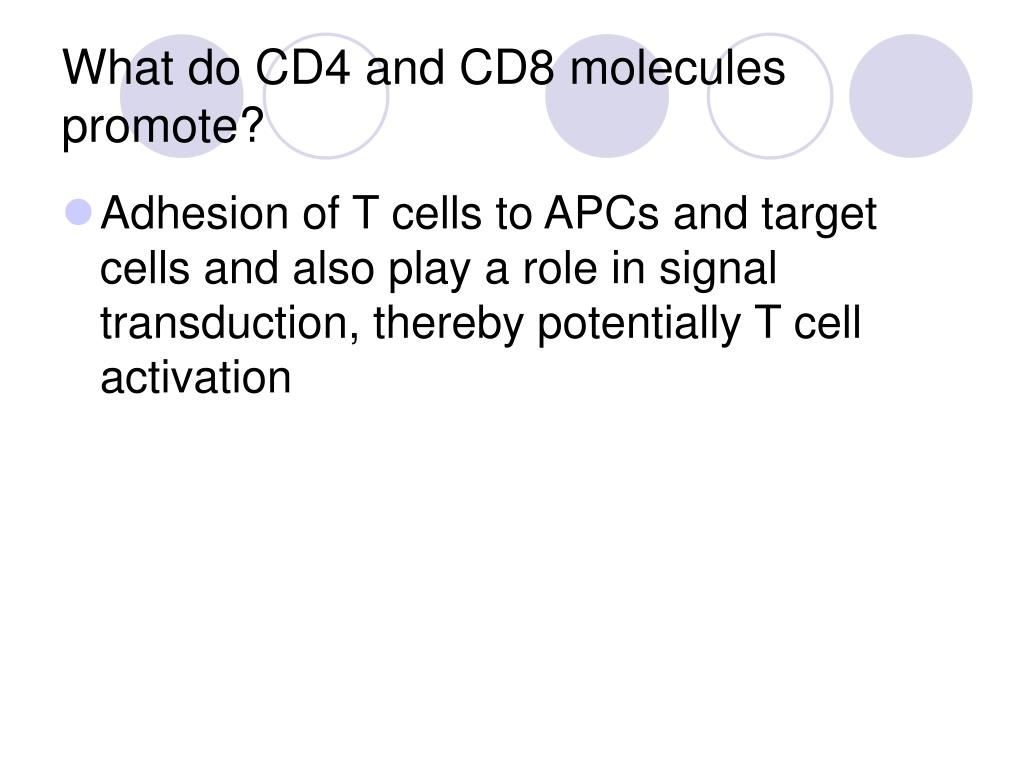 What do CD4 and CD8 molecules promote?