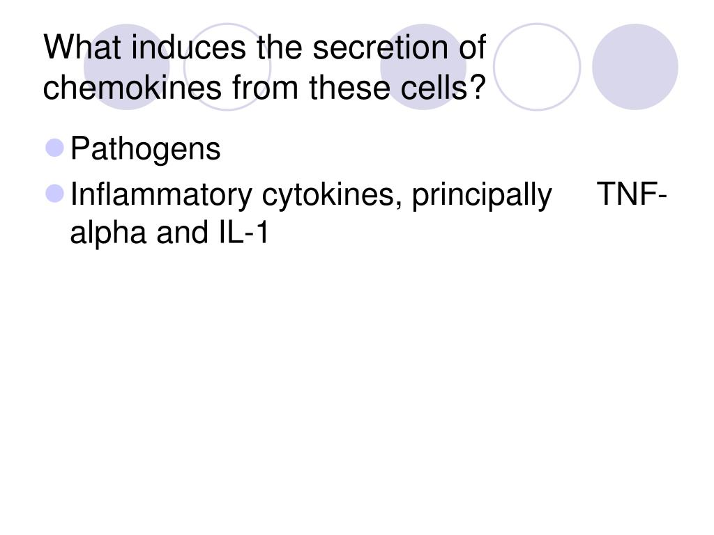 What induces the secretion of chemokines from these cells?