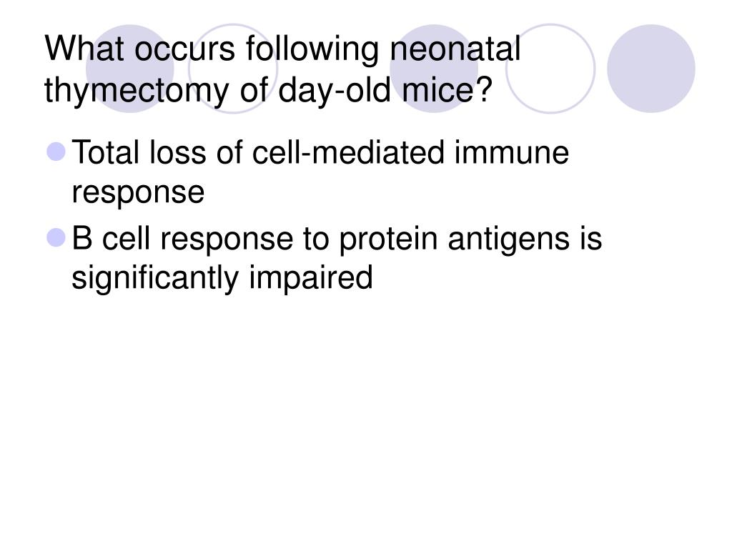What occurs following neonatal thymectomy of day-old mice?