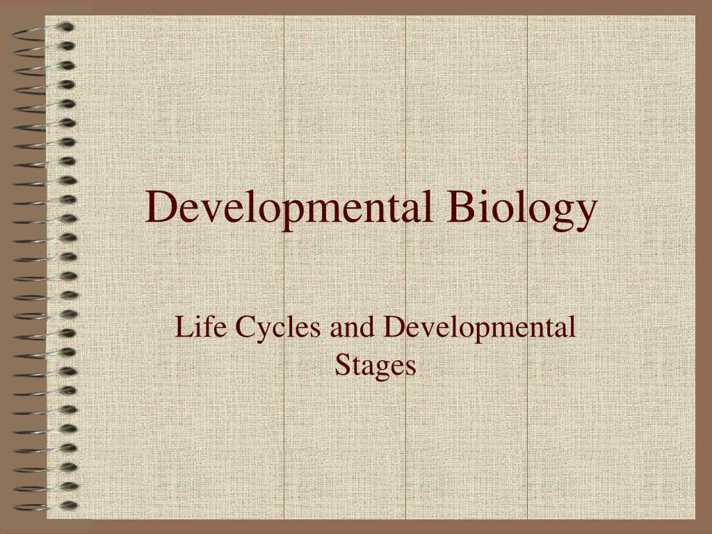 developmental biology l.