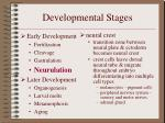 developmental stages11