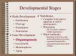 developmental stages13