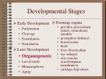 developmental stages14