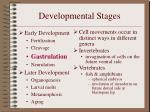 developmental stages7