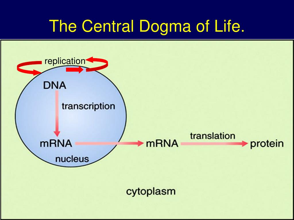 the central dogma of life l.