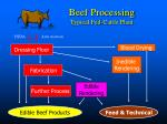 beef processing typical fed cattle plant