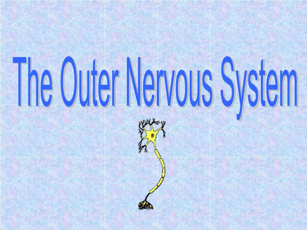 The Outer Nervous System