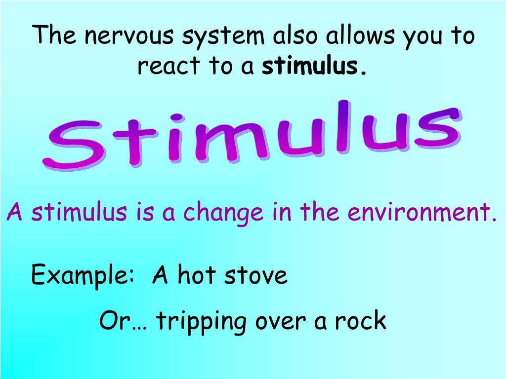 The nervous system also allows you to react to a