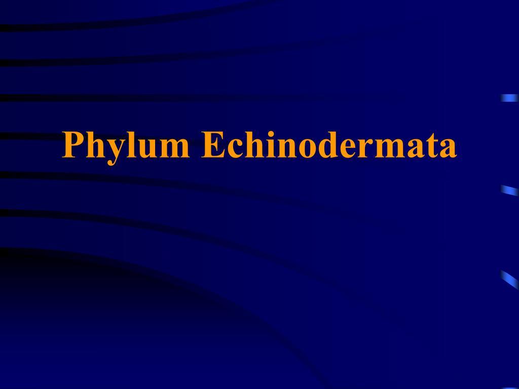 phylum echinodermata l.