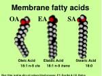 membrane fatty acids