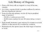 life history of oogonia