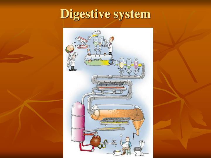 digestive system n.