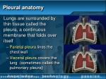 pleural anatomy
