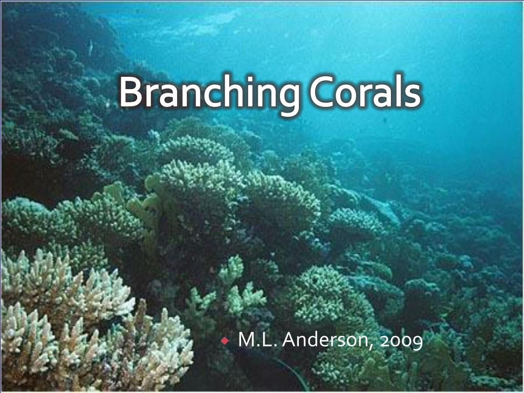 branching corals l.