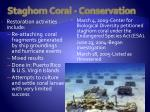 staghorn coral conservation13
