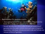 staghorn coral description5