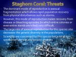 staghorn coral threats11