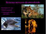 sistema nervoso desenvolvido