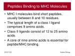 peptides binding to mhc molecules