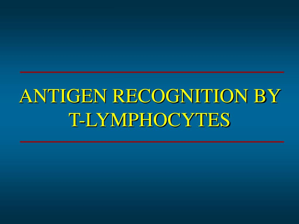 antigen recognition by t lymphocytes l.